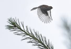 for the birds project seeks southwest virginia volunteers