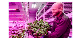 philips led grow light led indoor farming enables 25 harvests a year forum for the future
