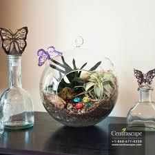 mika glass globe terrarium with jute hanger centrascape