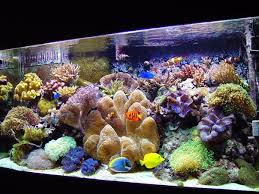 Decorative Water Tanks Best 25 Fish Tank Sizes Ideas On Pinterest Unique Fish Tanks