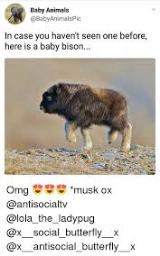 Baby Animal Memes - 25 best memes about baby animals baby animals memes