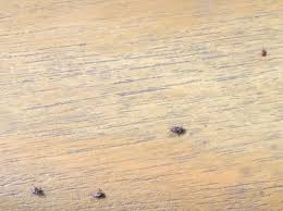 small brown bugs on garden furniture page 1 invertebrates