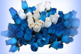 white and blue roses blue white blue roses wallpapers and images desktop nexus groups