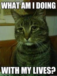 Stupid Cat Meme - best of the depressed cat meme smosh