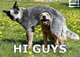 Hi Memes - hi guys funny dog picture