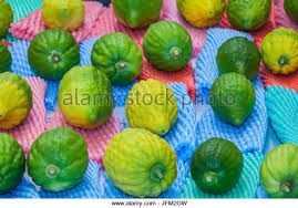 etrog for sale citron etrog stock photos citron etrog stock images alamy
