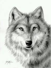 55 best wolf drawings images on pinterest tutorials wolf