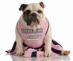Halloween Costumes English Bulldogs Safe Pet Halloween Costume Tips Contemporary Pet