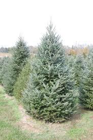 nieman u0027s tree farm kentucky christmas tree association