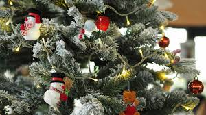 where to buy a tree in the conshohocken plymouth