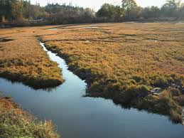 Wetland Resources Of Washington State by Trump Administration To Propose Repealing Rule Giving Epa Broad