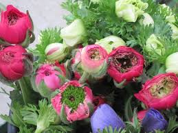 Ranunculus Flower Green Center Pink Ranunculus Flowers And Fillers Flowers By