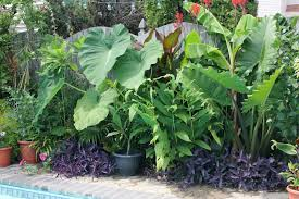 Tropical Gardening Ideas Backyard Tropical Backyard Landscaping Ideas Tropical Pool