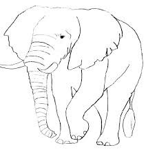 Coloriages Delephants Elephants A Cryptic Coloration Synonym