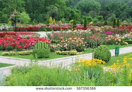 keukenhof largest flower garden europe holland stock photo