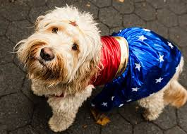 100 Halloween Dog Costume Ideas 100 Halloween Dog Costumes Tompkins Square Halloween Dog