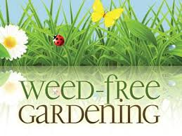 church powerpoint template weed free gardening sermoncentral com
