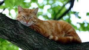 cat pictures qygjxz