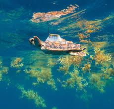sea turtle week 2017 noaa fisheries