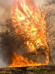 Wildfire Carson Wa by Good Policy And Good Intentions Won U0027t Stop Big Wildfires U2014 High