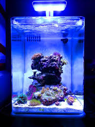 Aquascape Reef 11 Inspirational Innovative Marine Nuvo Aquariums Marine Depot Blog
