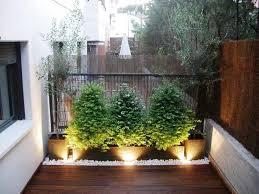 kletterpflanzen fã r balkon bambusmatten gehölze und olivenbäume im pflanzkasten balkon