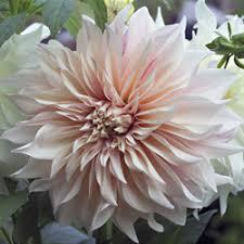 fresh cut flowers michigan flower farm naturally grown fresh cut flowers