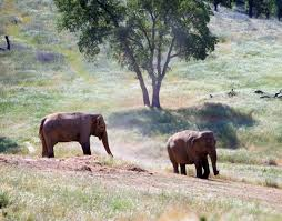 no ethical way to keep elephants in captivity u2013 national