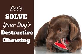 how to stop a puppy or dog from destructive chewing