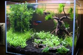 Aquascape Layout Custom Aquarium Aquascape Design