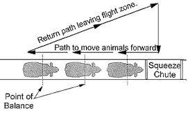 Path Of Light Through The Eye Behavioral Principles Of Livestock Handling