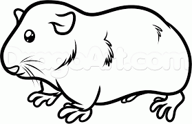 guinea pig coloring pages guinea pig coloring pages for kids