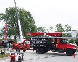 best tree service companies on angie s list angie s list