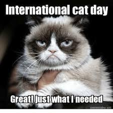 Grumpy Cat Meme Creator - international cat day great just whati needed meme maker jet cats