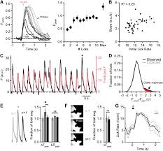 movement rate is encoded and influenced by widespread coherent