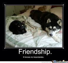 Happy Weekend Meme - it s november i meme it rumpydog