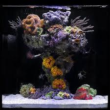 nano aquascape john ciotti s upside down reef nano tank nano reef inspiration