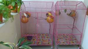 How To Decorate A Birdcage Home Decor How To Make U0026 Decorate A Colourful Love Birds Cage Youtube