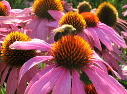 Flowers Bees Pollinate - visual cues
