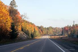 fall colours algonquin park carolyn stampeen