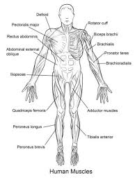 38 best anatomy and physiology images on pinterest anatomy and