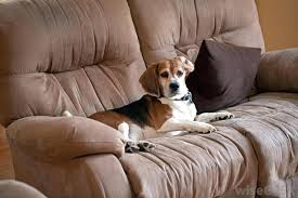 best sofa fabric for dogs best sofa material for dogs best furniture material best material