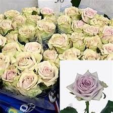 Wholesale Roses Rose Fifth Avenue 50cm Wholesale Flowers U0026 Florist Supplies Uk