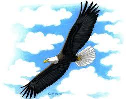 bald eagle illustration free download clip art free clip art