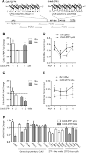 targeted epigenetic remodeling of the cdk5 gene in nucleus