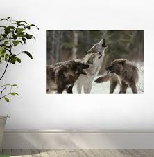 living with wolves facebook wolf wall decal