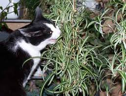 plants that cats like gardening for cats