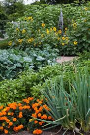 563 best plantings images on pinterest garden ideas gardens and
