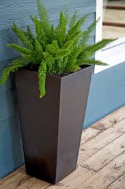 decorations modern balcony planters tall green plants in my blue