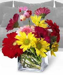 congratulations flowers congratulations flowers willoughby oh plant magic florist